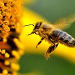 La danza delle api. Autonomia ed interdipendenza nella disabilità.
