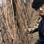 Una nuova primavera per il nostro vino sociale Roero Arneis 8mani